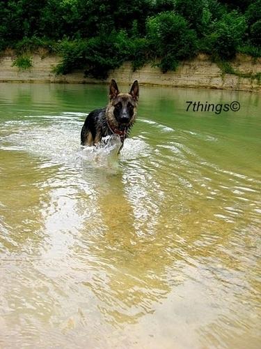 Dog ; 7things©