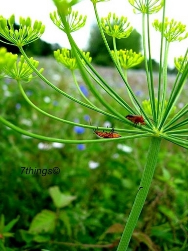 Nature ; 7things©