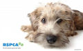 RSPCA WALLPAPER - against-animal-cruelty photo