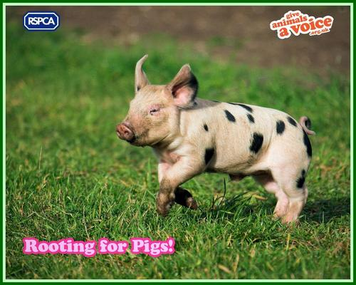 Against Animal Cruelty! wallpaper titled RSPCA WALLPAPER