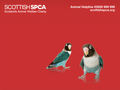SSPCA BIRD WALLPAPER