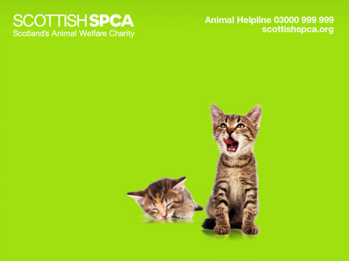 SSPCA  KITTEN WALLPAPER