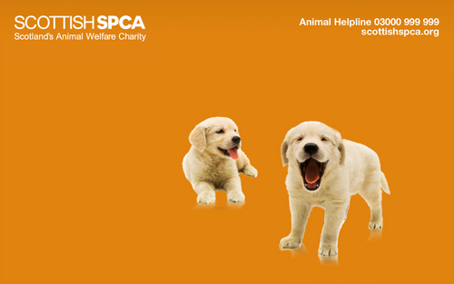 SSPCA  PUPPY WALLPAPER