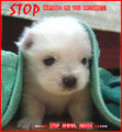 STOP ANIMAL ABUSE NOW !! - against-animal-cruelty photo