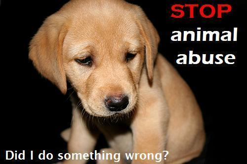 STOP ANIMAL ABUSE NOW !!