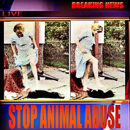STOP ANIMAL ABUSE NOW