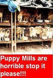 Stop কুকুরছানা Mills :(