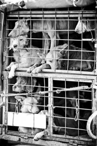 Stop puppy Mills :(