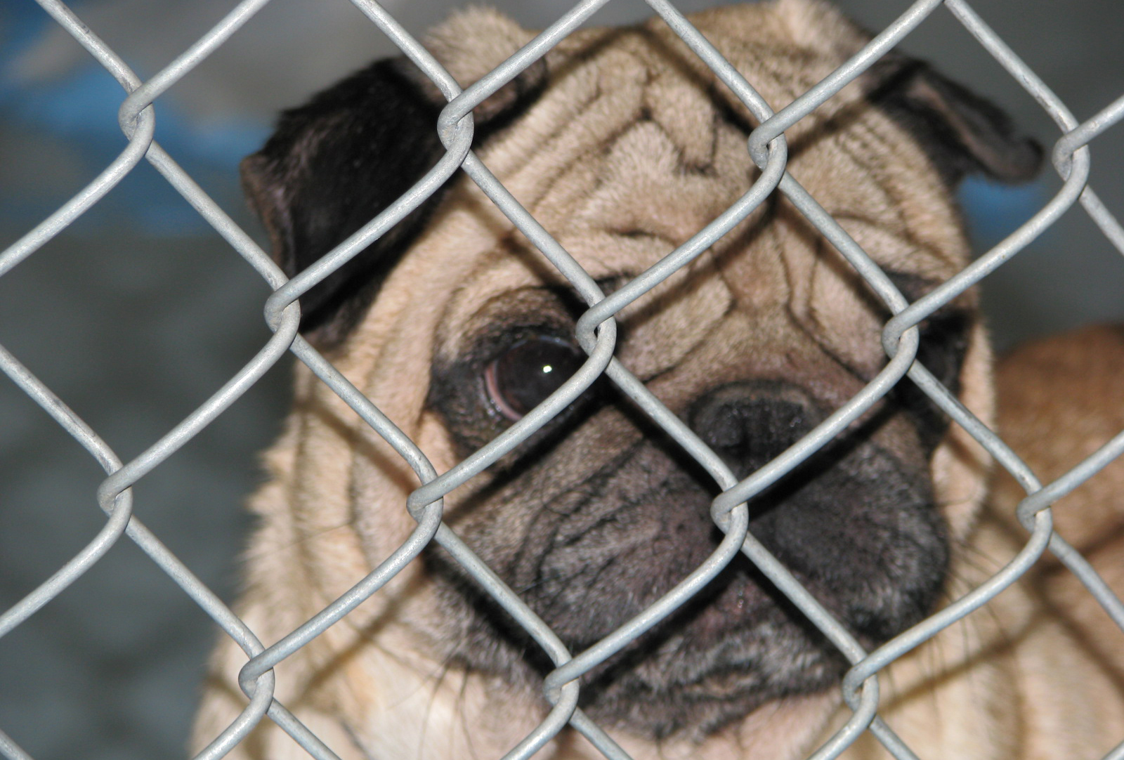 puppy mills For more than three decades, the animal legal defense fund has been fighting to protect the lives and advance the interests of animals through the legal system.