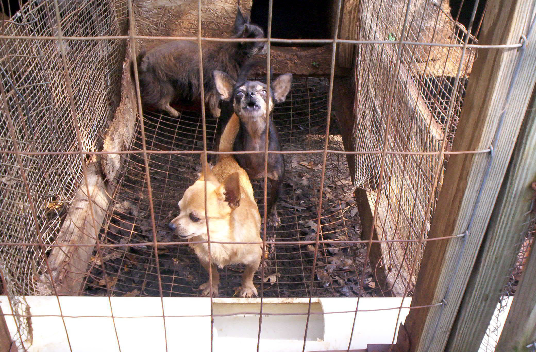 against puppy mills images stop puppy mills hd