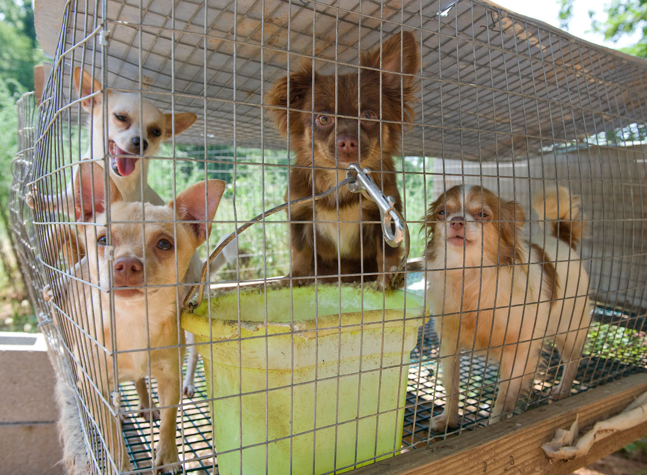 puppy mill All in all, bill rescues dozens of dogs as he and lisa visit puppy mill after puppy mill lisa says seeing the way the animals live was haunting.