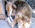 WE MUST HELP PUT A STOP TO THIS !! - against-animal-cruelty photo