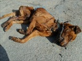 We must help STOP THIS !! - against-animal-cruelty photo