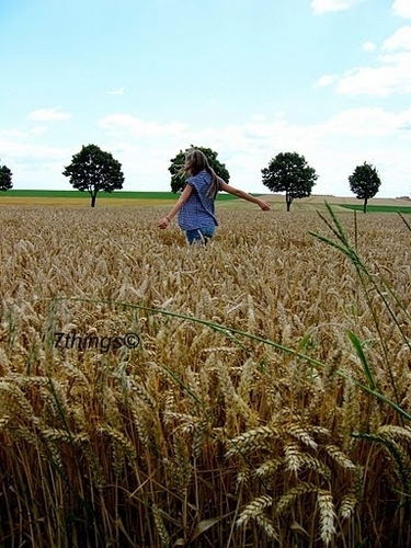 Photography wallpaper called Wheat Fields 7things©