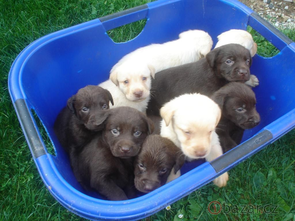 A bundle of beauties :)