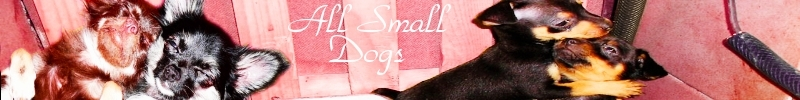 All Small chó Banner