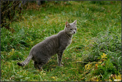 Cedarstream, LakeClan Medicine Cat