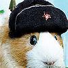 Guinea Pigs photo called Cute Guinea Pig