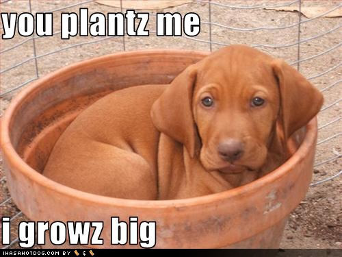Cute Labrador :)