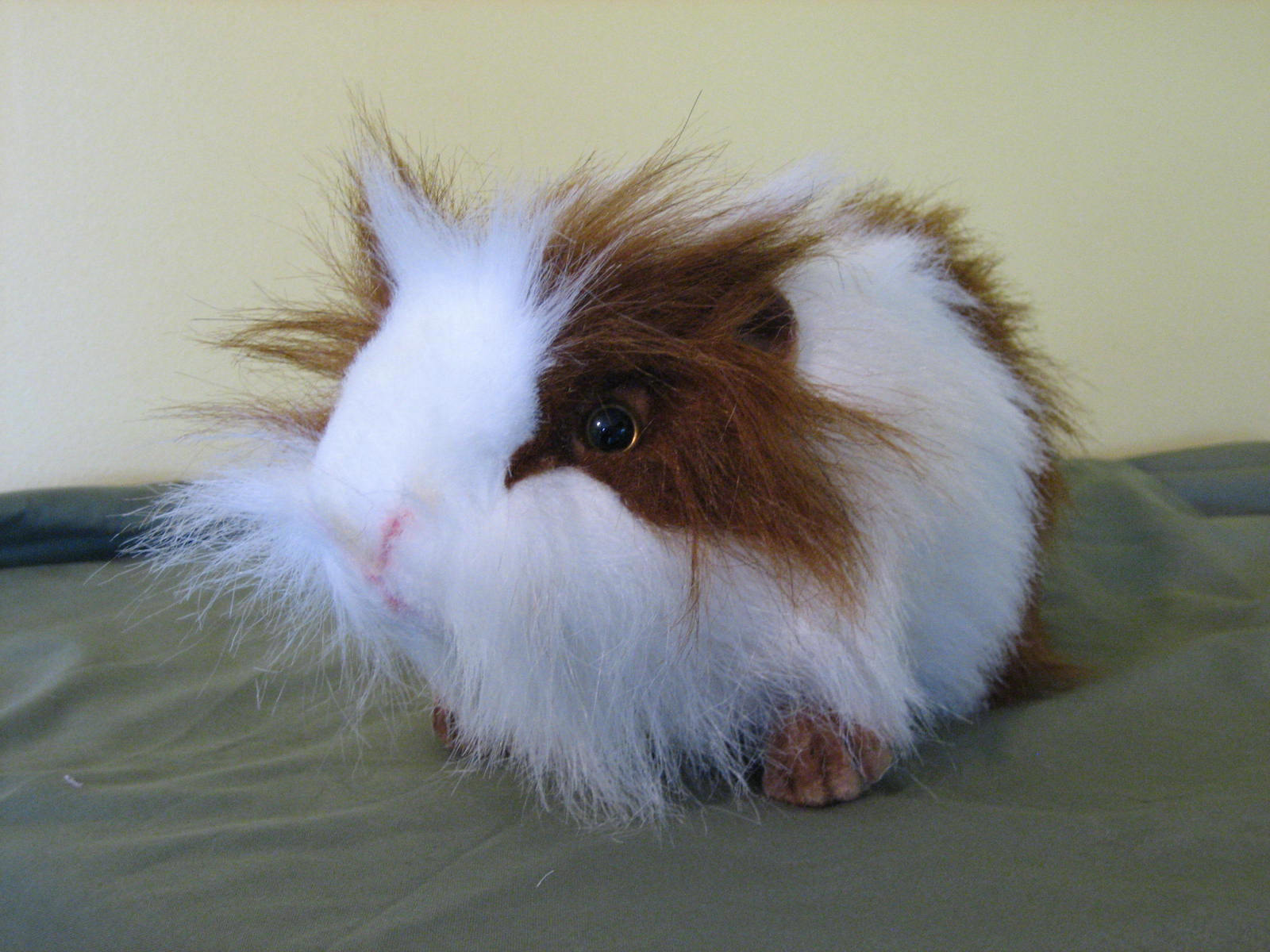 guinea pigs images guinea pigs wallpaper photos 15107381