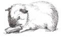 Guinea Pigs - guinea-pigs fan art
