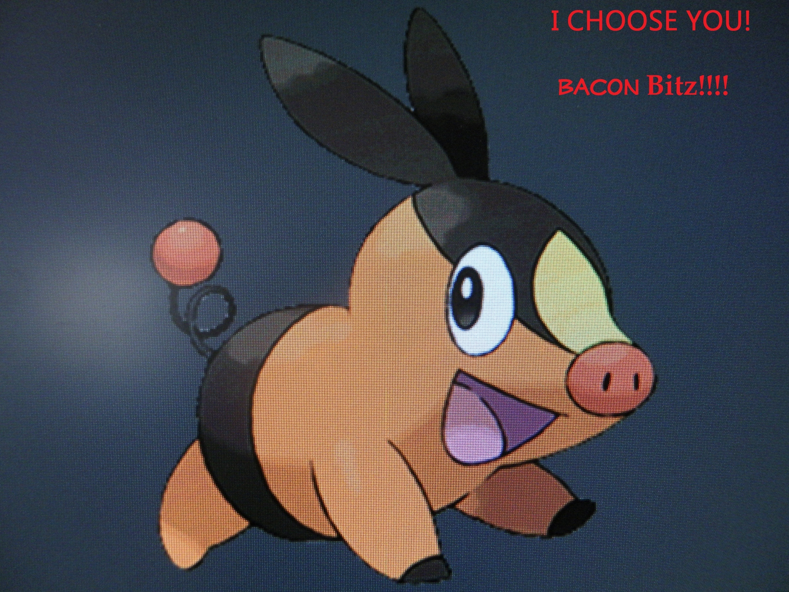 pokémon images i choose you, bacon bitz! hd wallpaper and background