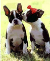 Kiss,kiss - puppies photo