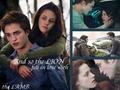 Random Twilight - twilight-series photo