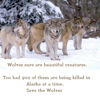 Save The Beautiful serigala, wolf