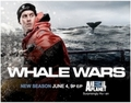 Whale Wars Ad