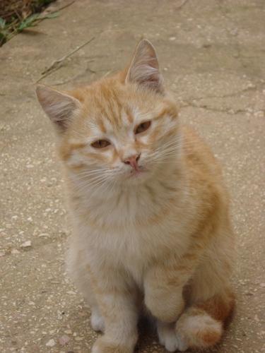 my friend`s cat :):):) soo cuteee