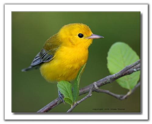 A cute little bird