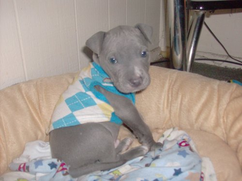 Bleu as a কুকুরছানা