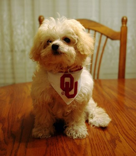 Boomer is ready for the game