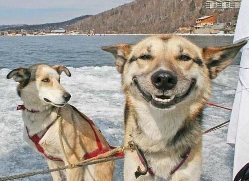 Smiling জন্তু জানোয়ার