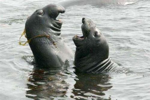 Smiling động vật