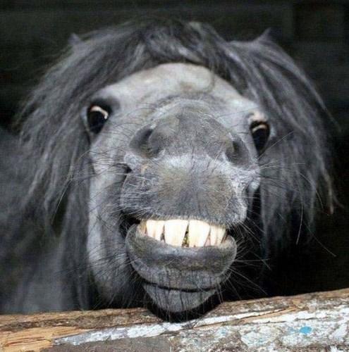 Smiling animales