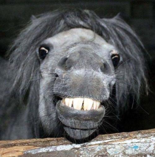 Smiling animals - Rand...