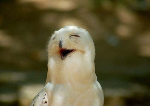 Smiling 동물