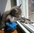 crazy cats! लोल