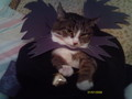 my cat dressed as Death Note charictors!