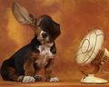 Basset Hound - hound-dogs photo