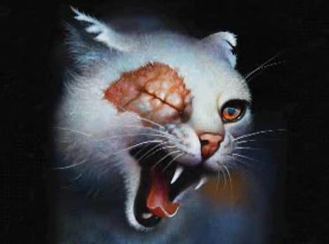 Warriors (Novel Series) پیپر وال containing a kitten, a tom, and a cat called Brightheart