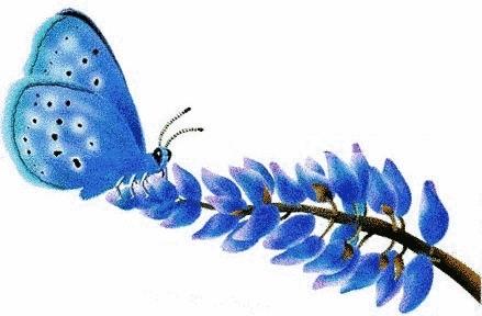 バタフライ, 蝶