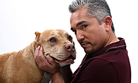 Cesar Millan images Cesar wallpaper and background photos