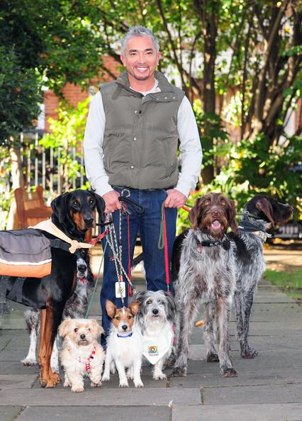 Cesar Millan Dog Treats