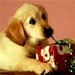 Doggy Icons^^ - dogs icon