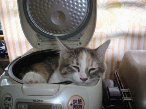 Lazy gatos //