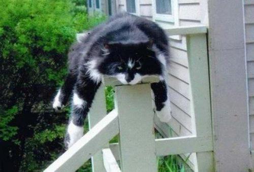 Lazy cats //