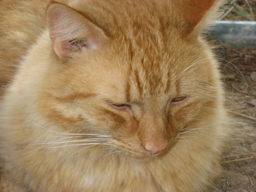 My cat Oliver